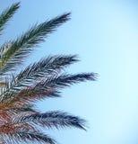 Piante di una palma Fotografia Stock