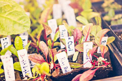 Piante di verdure Immagini Stock Libere da Diritti