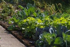 piante di verdure su un giardino del cottage Immagini Stock Libere da Diritti