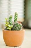 Piante differenti del cactus Fotografia Stock Libera da Diritti