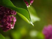 Piante dopo la pioggia fotografia stock