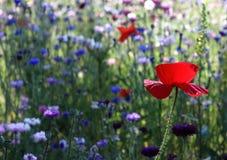 Piante e fiori Fotografie Stock