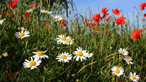 Piante e fiori Fotografia Stock