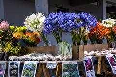 Piante e fiori da vendere vicino a Santana in Madera che è un bello villaggio sulla costa del nord Fotografie Stock