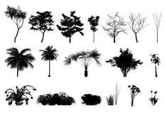 Piante e fiori dell'albero della siluetta Immagini Stock Libere da Diritti