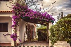 Piante e giardino di autunno nel Portogallo Algarve Immagine Stock