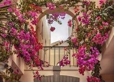 Piante e giardino di autunno nel Portogallo Algarve Fotografia Stock Libera da Diritti