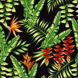 Piante e palme tropicali Fotografia Stock