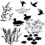 Piante ed uccelli della zona umida messi Fotografie Stock Libere da Diritti
