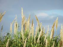 Piante, erba e cielo Fotografie Stock Libere da Diritti