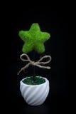 Piante a forma di stella su fondo nero Fotografie Stock