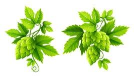 Piante fresche del luppolo con il vettore delle foglie verdi Immagini Stock Libere da Diritti