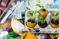 Piante germogliate al materiale di riporto Immagini Stock