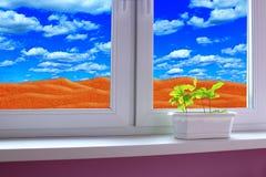 Piante giovani in POT Deserto sabbioso dietro la finestra di stanza fotografia stock libera da diritti