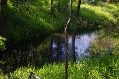 Piante indigene - il fiume Potomac -2 Fotografia Stock Libera da Diritti