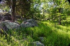 Piante indigene - il fiume Potomac - 3 Immagini Stock Libere da Diritti