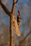 Piante in inverno Fotografie Stock