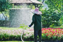 Piante irriconoscibili di Watering Colorful Flowering del giardiniere nel parco immagine stock libera da diritti