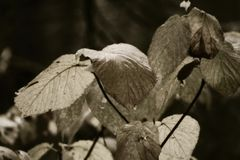 piante in legno Immagini Stock