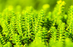 Piante minuscole verdi immagini stock