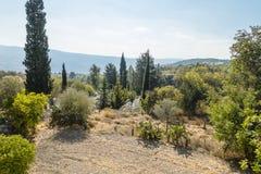 Piante nel Cipro Fotografia Stock