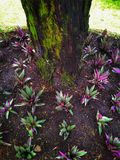 Piante nel giardino Immagini Stock