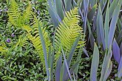 Piante nel giardino fern fotografie stock libere da diritti