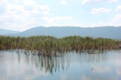 Piante nel lago Florina Grecia del Nord Prespes immagini stock