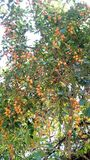 Piante ornamentali Fotografia Stock