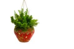 Piante ornamentali in vaso isolato su fondo bianco Fotografia Stock