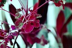 Piante rosa di colore su fondo verde chiaro Fotografia Stock Libera da Diritti