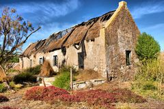 Piante rosse davanti alla casa abbandonata Fotografia Stock