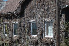 Piante secche sulla parete della casa fotografie stock libere da diritti