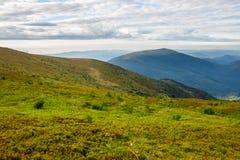 Piante selvatiche alla cima della montagna Immagine Stock Libera da Diritti
