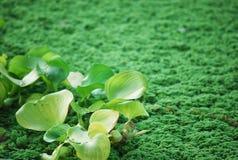 Piante selvatiche con Moss Background verde Fotografie Stock