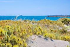 Piante selvatiche della duna seguendo la linea della costa dell'Oceano Indiano Fotografie Stock