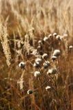 Piante selvatiche della montagna Fotografie Stock Libere da Diritti