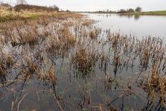 Piante selvatiche stagionate al bordo dell'acqua Fotografia Stock Libera da Diritti