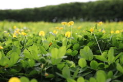 Piante selvatiche verdi fotografie stock