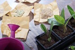 Piante, semi ed alto vicino dell'annaffiatoio Fotografia Stock Libera da Diritti