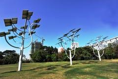piante solari della struttura ad albero Immagine Stock