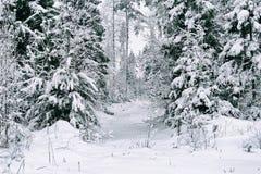 Piante sotto la neve nella foresta di inverno Fotografia Stock Libera da Diritti