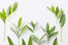 piante su fondo bianco immagini stock