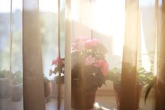 Piante sui fiori domestici interni di tramonto di davanzale per il negozio del deposito immagine stock libera da diritti