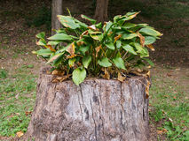Piante sul ceppo di albero Fotografia Stock Libera da Diritti