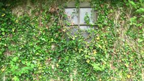 Piante sulla finestra della parete e sulla porta di vecchia e casa abbandonata archivi video