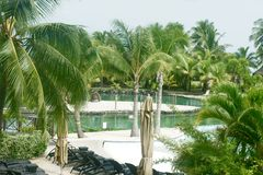 Piante tropicali Immagine Stock