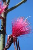 Piante tropicali Fotografie Stock