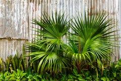 Piante tropicali Fotografia Stock