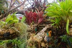 Piante tropicali che crescono su un ramo Fotografia Stock